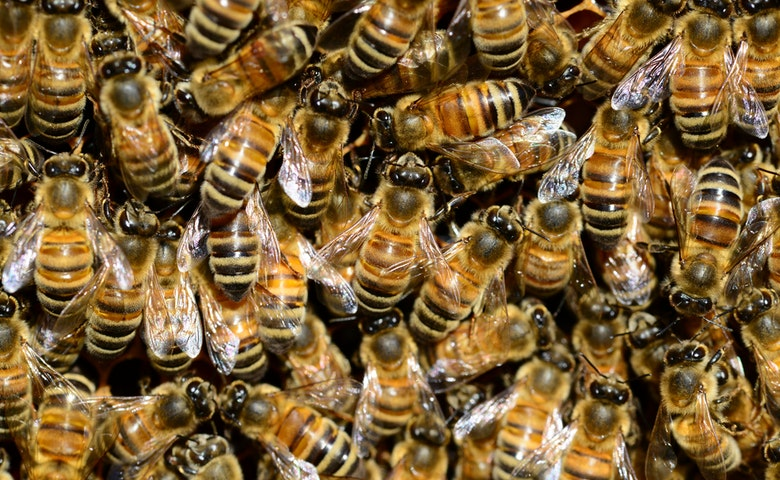 What to Do If You Find Honeybees Swarming in Your Yard
